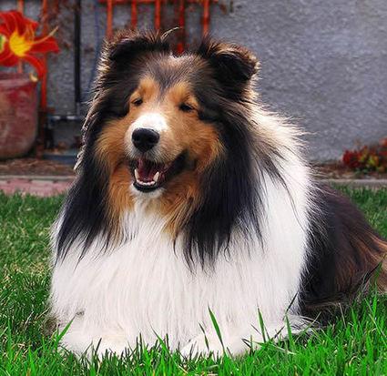 Top 10 smartest dogs in the world | TOP10 | Jacob gadget | Scoop.it