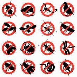 Dịch vụ diệt côn trùng giá rẻ uy tín chuyên nghiệp   Dịch  vụ diệt côn trùng   Scoop.it