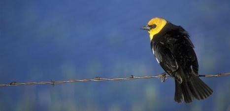 Murs, clôtures, barbelés : quand les animaux sont victimes des conflits humains | Bien commun-Biens communs | Scoop.it