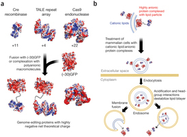 Cationic lipid-mediated delivery of proteins enables efficient protein-based genome editing in vitro and in vivo   Awesome Science That  I Like   Scoop.it