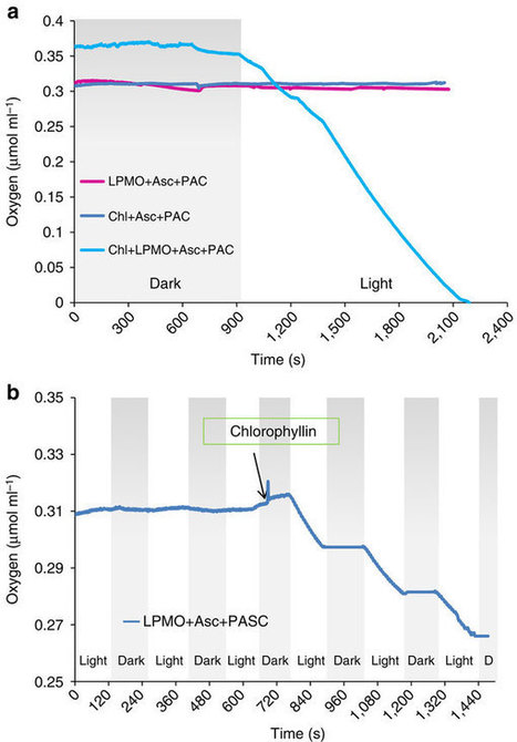 Light-driven oxidation of polysaccharides by photosynthetic pigments and a metalloenzyme | plant cell genetics | Scoop.it