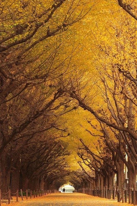 [Image] | 20 Mystical Tree Tunnels That You Would Want To Walk... - TIMEWHEEL | coolpics | Scoop.it