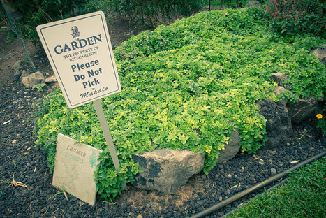 How does your hotel garden grow - Bacon is Magic | Vertical Farm - Food Factory | Scoop.it