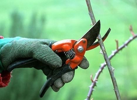 Préparer son jardin pour le printemps   Jardin - Terrasse   Mobilier et décoration pour la maison   Scoop.it
