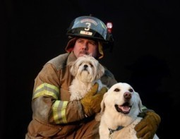 Pets and Fire Safety: What You Need to Know | i Love Dogs | Fire Safety | Scoop.it