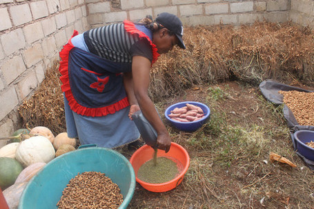 IPS – In Swaziland, Seeds Beat Drought | Inter Press Service | Hope | Scoop.it