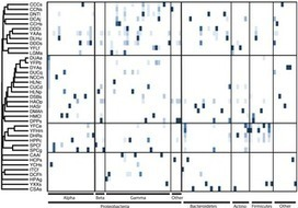 A Cross-Taxon Analysis of Insect-Associated Bacterial Diversity | Social Foraging | Scoop.it