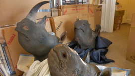 Who's the top bidder for Rhino Horn these days? | What's Happening to Africa's Rhino? | Scoop.it