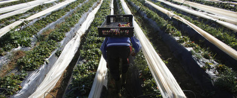 Au Maroc, la campagne agricole s'annonce meilleure que l'année dernière - Huffpostmaghreb.com | Agriculture et Alimentation méditerranéenne durable | Scoop.it