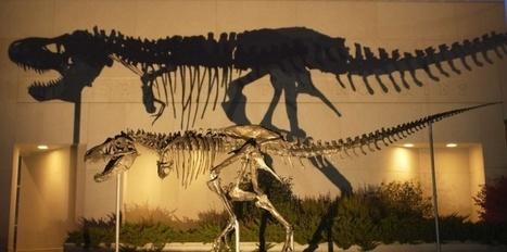 Dinosaure : le T-rex chassait bien ses proies - Le Nouvel Observateur | Préhistoire | Scoop.it
