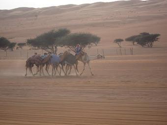 Adventures of a Muscat-teer! | Exchange Student Scholarships | Scoop.it
