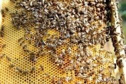L'Union européenne va interdire trois pesticides tueurs d'abeilles | Actus Bien-être - Santé | Scoop.it