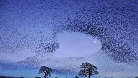 You Won't Believe These Patterns Created by Flocks of Birds in Flight | AL_TU research | Scoop.it