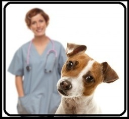 Is Online Pet Medication Cheap-Facts Revealed | Petcarestore | Scoop.it