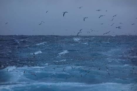 Havets sultne får også sin del av silda | News on the World from a Nordic view | Scoop.it