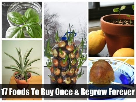 17 Foods To Buy Once And Regrow Forever | Paz y bienestar interior para un Mundo Mejor | Scoop.it