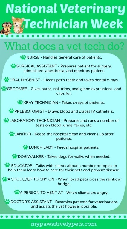 What Is a Veterinary Technician? | National Veterinary Technician Week | Pawsitively Pets | Veterinary News | Scoop.it