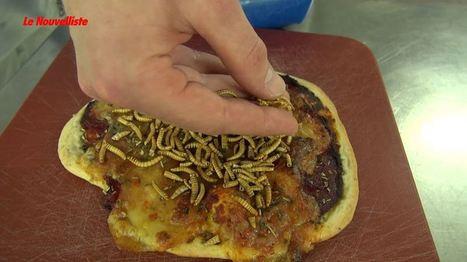 Des étudiants de la HES-SO Valais-Wallis comptent mettre des insectes dans votre assiette | HES-SO Valais-Wallis | Scoop.it