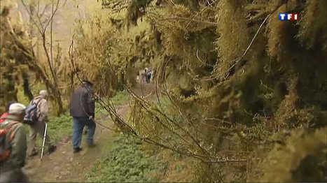 """Promenade dans """"la petite Amazonie"""" - Le journal de 13h - TF1   Vallée d'Aure - Pyrénées   Scoop.it"""