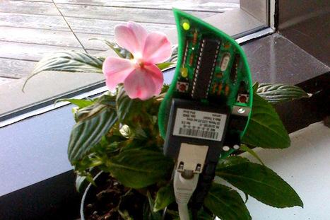 Las plantas ya pueden chatear y mandar tweets | arduino integración | Scoop.it