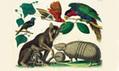 Albertus Seba's Cabinet of Natural Curiosities | Miscmisc | Scoop.it
