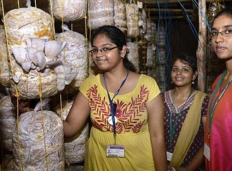 Chennai, India:  Women from slums grow mushrooms | Mushroom cultivation in The Third World | Scoop.it