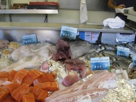Manger trop de poisson enceinte n'est pas bon pour le bébé   Ainsi va le monde actuel   Scoop.it
