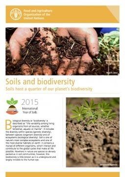 A healthy soil is a living soil| FAO | GarryRogers NatCon News | Scoop.it