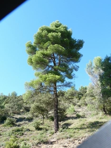 Promenade d'octobre en Provence ! | The Blog's Revue by OlivierSC | Scoop.it