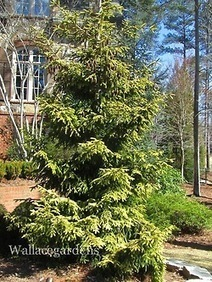 In honor of Georgia Arbor Day (February 15, 2013)... | Garden Design with Wallace Gardens | Scoop.it