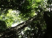 Do you know the trees of Kenya? | Agricultural Biodiversity | Scoop.it