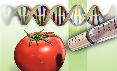 GMO Dangers - FDA scientists warned but were ignored... | Health Supreme | Scoop.it