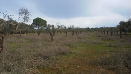Workshop Announcement Pre-registration Call for Abstracts: International Training Workshop on Xylella fastidiosa and the Olive Quick Decline Syndrome (OQDS) - International Plant Protection Convention | MAIB FTN Community Press Review 2015-2016 | Scoop.it
