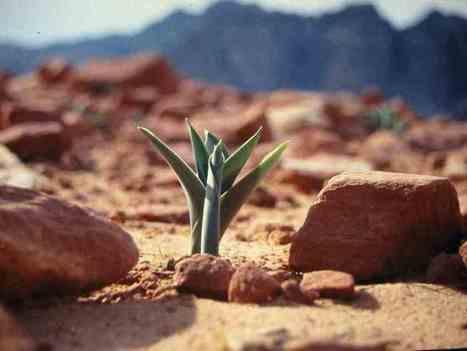 Quand l'épreuve nous fait grandir ! | Informations positives | Scoop.it