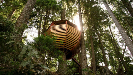 These Are The Most Amazing Tree Houses Ever | Strange days indeed... | Scoop.it