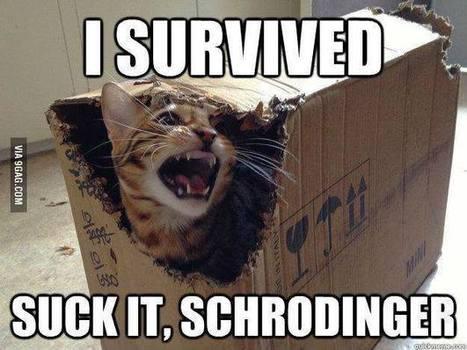 Schrodinger's cat revenge ... | BLAGA2BAL | Scoop.it
