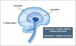 Los tres cerebros: reptiliano, límbico y neocórtex | Terapia de sonido | Scoop.it