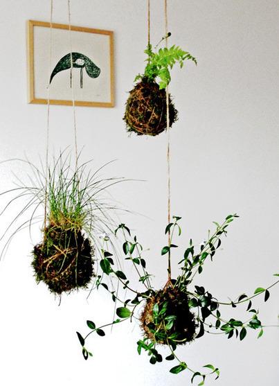 TodoManualidades | Flores y plantas | Scoop.it