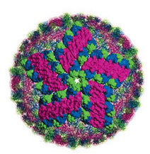Dengue fever found in Key West, but not Tucson   Viruses and Bioinformatics from Virology.uvic.ca   Scoop.it