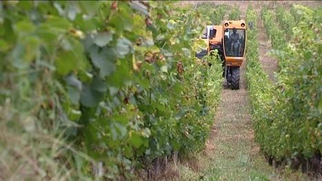 A Saint-Jean-de-la-Porte, les journées du patrimoine se préparent dans le vignoble | Le vin quotidien | Scoop.it