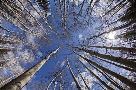 La forêt fragmentée perd en biodiversité | Charles Côté | Environnement | Le Petit Jardinier Urbain | Scoop.it