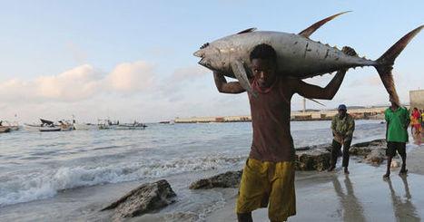 Préserver les stocks de poisson pour renforcer la résilience climatique sur les côtes africaines | Mer & Enseignements | Scoop.it