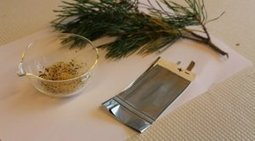 Smart, Eco-Friendly New Battery Made of Seeds and Pine Resin | ScienceDaily | Social Innovation & Sustainability | Scoop.it