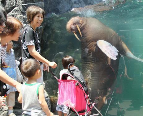 [Eng] Réouverture de l'aquarium de Fukushima dévasté | asahi.com | Japon : séisme, tsunami & conséquences | Scoop.it
