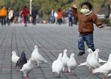 China's bird flu outbreak no cause for panic: WHO   Sustain Our Earth   Scoop.it