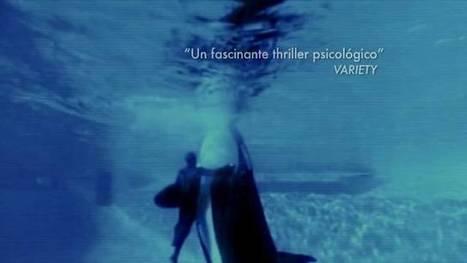 REPORTAJE. La pena de la orca mata | La prensa | Scoop.it