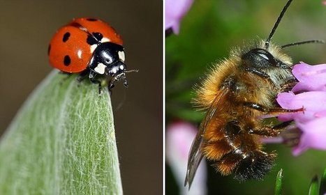 The humble ladybird is being sighted in unusually high numbers | NERC media coverage | Scoop.it