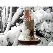 Best Bird Feeding Tips for Winter | Porch, Patio and Outdoor Decor | Scoop.it