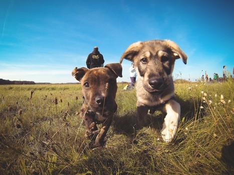 dog | Search Results | picjumbo —totally free photos for your commercial & personal works | Collections (Tools, photos, sounds, music) | Scoop.it