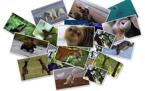 TV5MONDE- Les animaux racontent le changement climatique | Remue-méninges FLE | Scoop.it